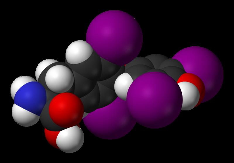Гормон Т4 свободный Тироксин | анализы крови со