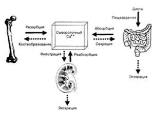 Патогенез гиперкальциемий